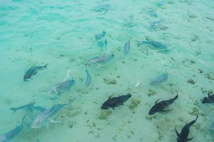 Fish in the sea at Maldives