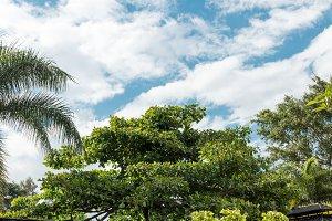Palm trees background, tropical Bali island, Indonesia.