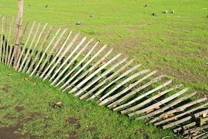 Green grass and fallen fence
