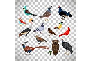 Cute birds set on transparent background
