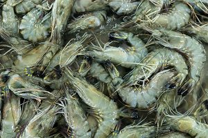 Fresh srimps background. Shrimps in a local market of tropical Bali island, Indonesia. Seafood background.