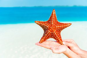 Tropical white sand with red starfish in hands background the sea