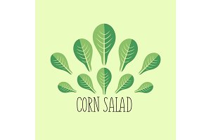 Corn salad leaf vegetable cartoon icon with light green background.