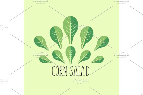 Corn Salad Leaf Vegetable Cartoon Icon With Light Green Background