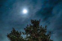 Pines at night in the woods. Moon ni