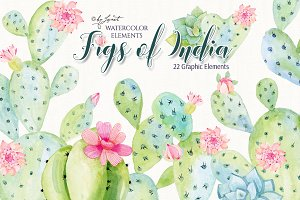 Figs of India Watercolor