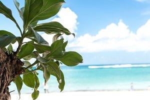 Untouched paradise tropical beach Nusa Dua on Bali island, Indonesia.