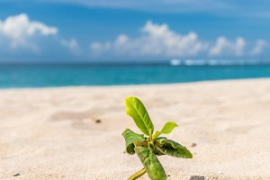 Small plants in the sand of beach. Tropical island Bali, Indonesia
