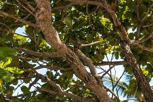 Up view on tropical tree on the beach. Magic Bali island, Indonesia.