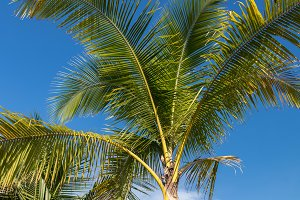 An image of tropical palm tree in the blue sunny sky on paradise island Bali, Indonesia.