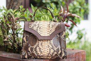 Close up of stylish female snakseskin python luxury bag outdoors. Fashionable and high style expensive female bag.