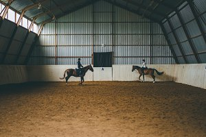 horse in an arena