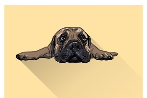 Drawing of  lying bull mastiff