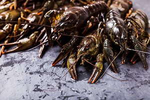 Fresh crayfish close-up