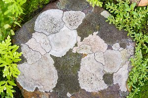 Lichen or moss