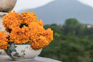 Marigold flowers in the bowl, tropical landscape and mountain on the background. Marigold if a traditional balinese flowers, they use it for offerings to gods. Bali, Indonesia.