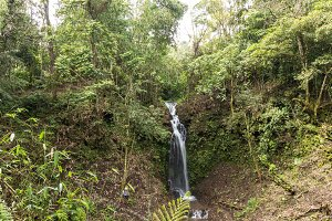 Beautiful waterfall in green forest in jungle in tropical Bali island, Indonesia. North of Bali island. Rainforest scene.
