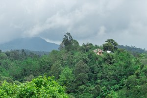Rainforest landscape view to the mountain. Tropical paradise island Bali, Indonesia.