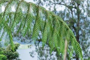 A fern in rain forest on the tropical magic island Bali, Indonesia.