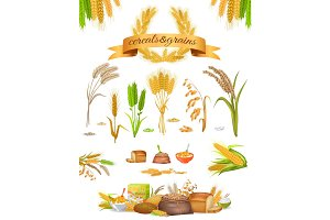 Set of Cereals and Grains on White Background
