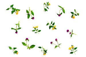 Floral pattern with pink clover and yellow wildflowers on white background. Flat lay, top view.