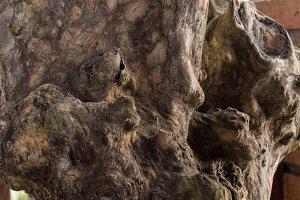 Macro tree background. Wooden texture pattern. Bali island.
