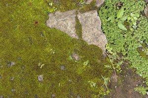 Moss on stone. Tropical magic Bali island, Indonesia.