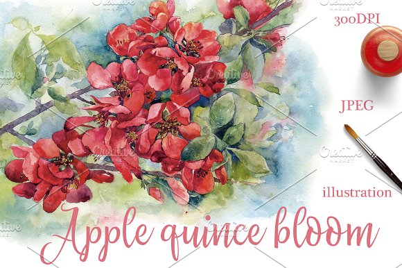 Watercolor Apple Quince Bloom