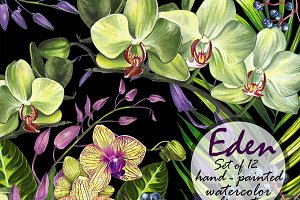 Orchid set 12 watercolor clipart