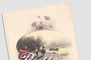 vtg greetings, poppies