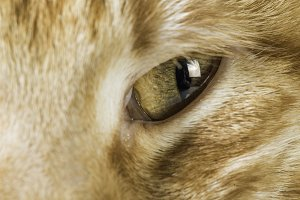 Orange cat close up eyes