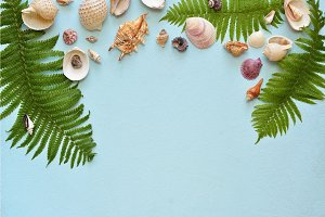 Flat lay. Top view. Frame of shells of various kinds on a blue background. Seashells on a pastel background.