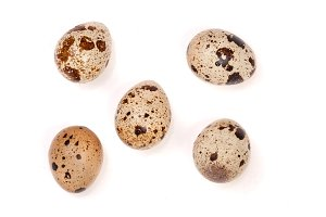 Several quail eggs isolated on white background. Top view