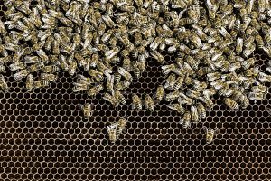 Beekeeper look honeycombs