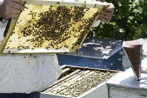 Beekeeper look honeycombs