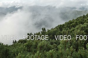 spruce with cones in mountain top on background of a rapidly running clouds. smooth movement