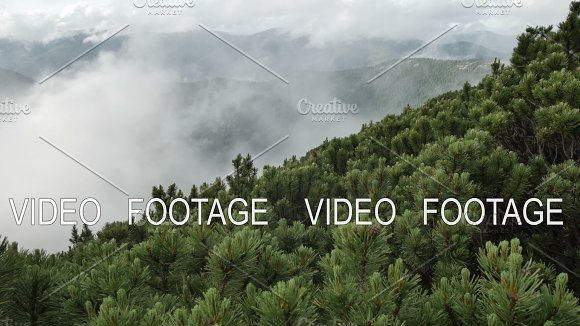 Spruce With Cones In Mountain Top On Background Of A Rapidly Running Clouds Smooth Movement