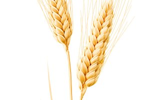 Isolated wheat with leaves