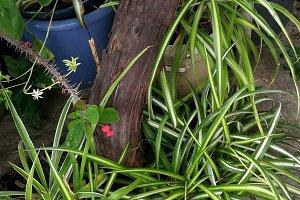Green rustic garden