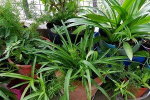 Green rustic garden in pots