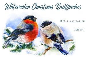 SALE! Christmas Bullfinches