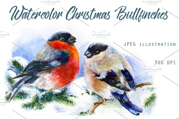 Christmas Bullfinches On Branch