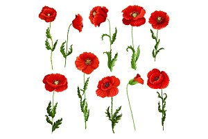 Vector isolated icons of poppy flowers
