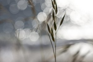 Oat Grass and Sparkling Water