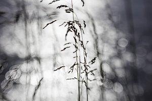 Grasses and Bokeh III