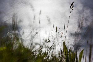 Weeds and Grasses with Bokeh