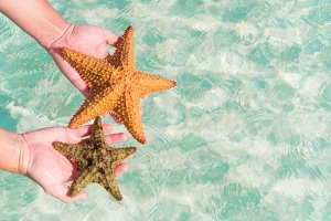 Tropical white sand with starfish in hands background the sea