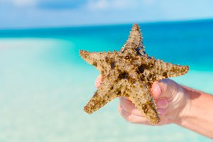 Close up starfish in hands background the turquoise sea
