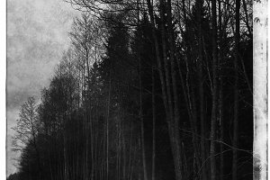 Vertical black and white cyberpunk radiated forest postcard back