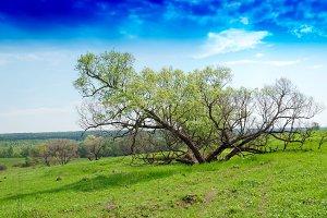 Horizontal dramatic tree on hill landscape background